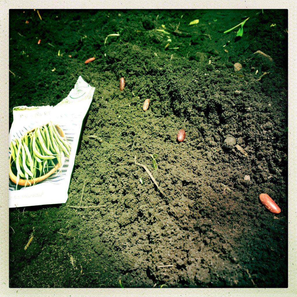 haricot vert seeds from pitchfork diaries